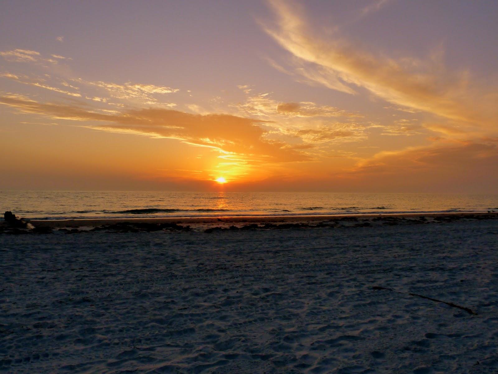 Seagulls at Sunset Florida For Desktop - seagulls at sunset florida wallpapers