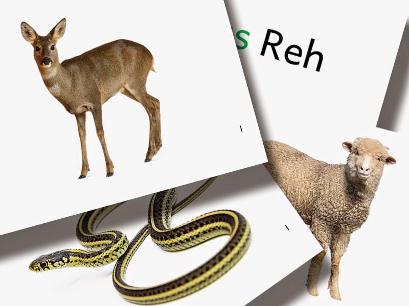 DaZ Material Tiere Bildkarten zur Sprachförderung kostenlos download