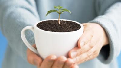 Consejos para tener una casa ecológica