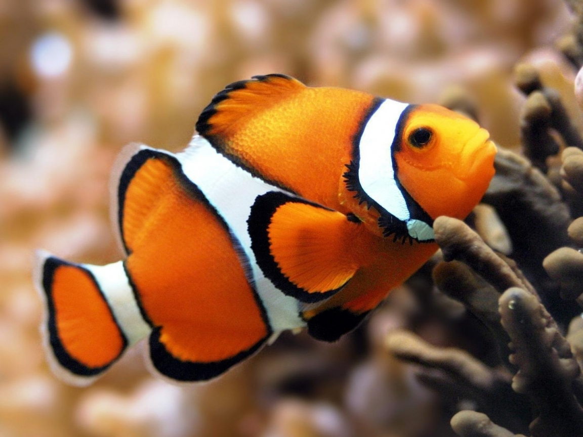 hq desktop wallpapers fish wallpapers beautiful fish