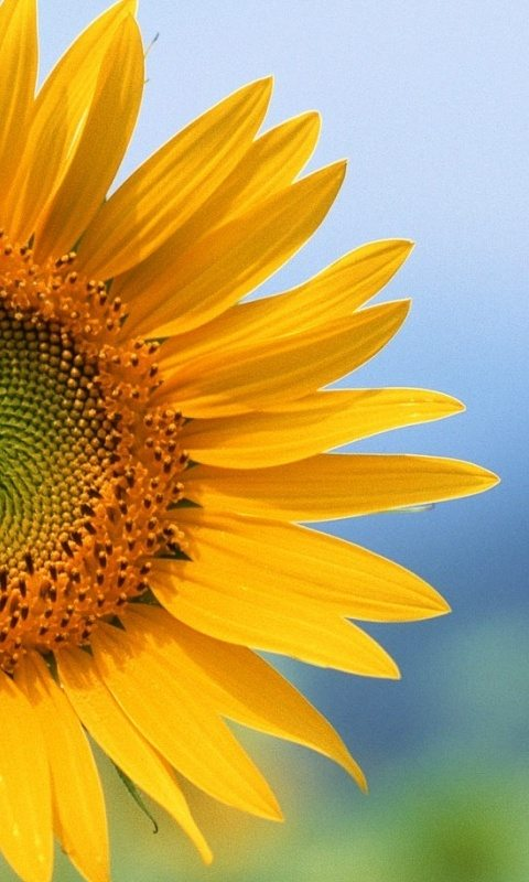 100 picture nokia n8 wallpapers free download for Girasoli tumblr