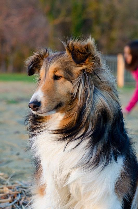 The Top 5 smartest dog breeds
