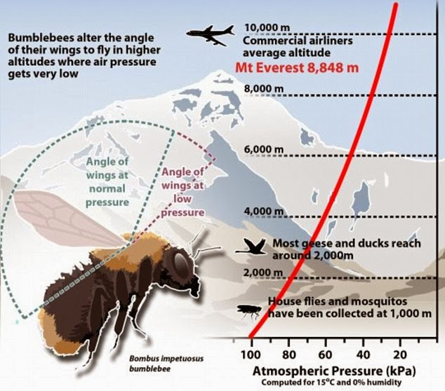 New Study: Bees can fly to heights higher than Mount Everest .. Heights that can kill human being!