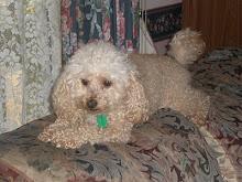 My Little Dog Oscar