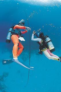 パラオ ダイビング クルーズ ツアー 世界遺産 旅行