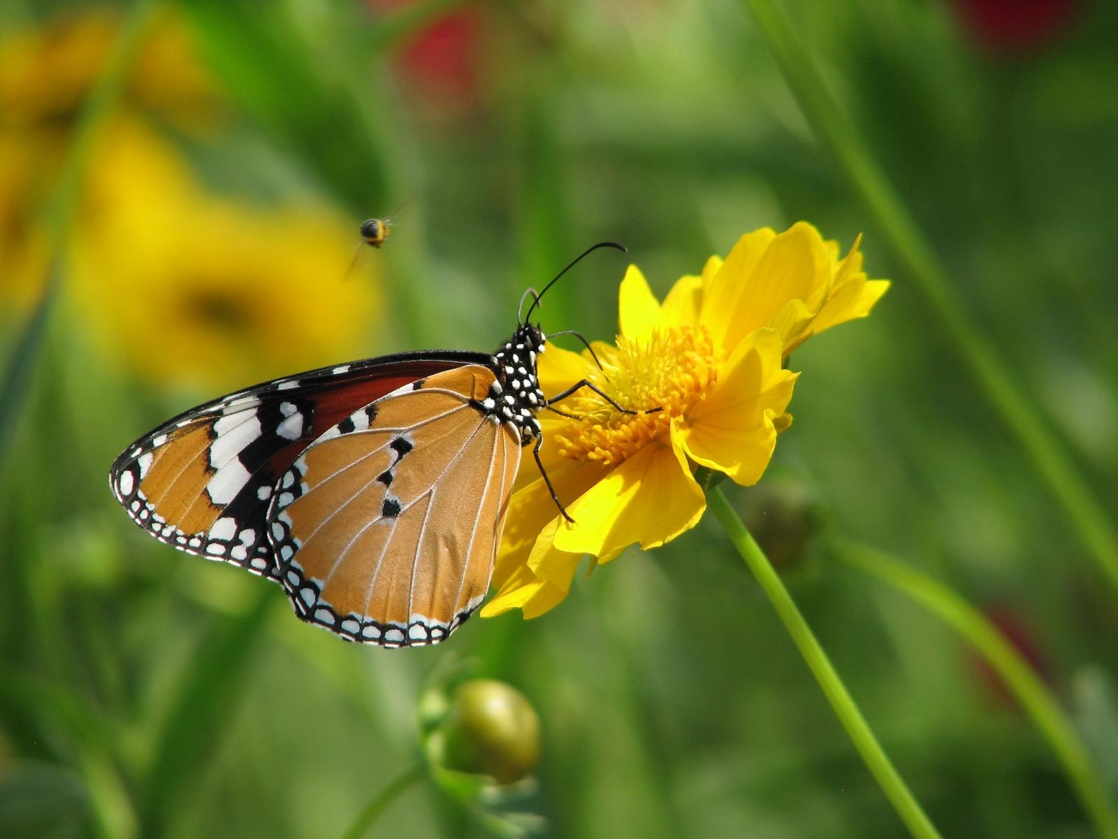 flowers for flower lovers.: HD flowers N butterfly desktop ...