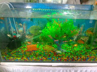 Pet shop ahmedabad fish exhibition at sanskar kendra 24 for Arowana fish tank decoration
