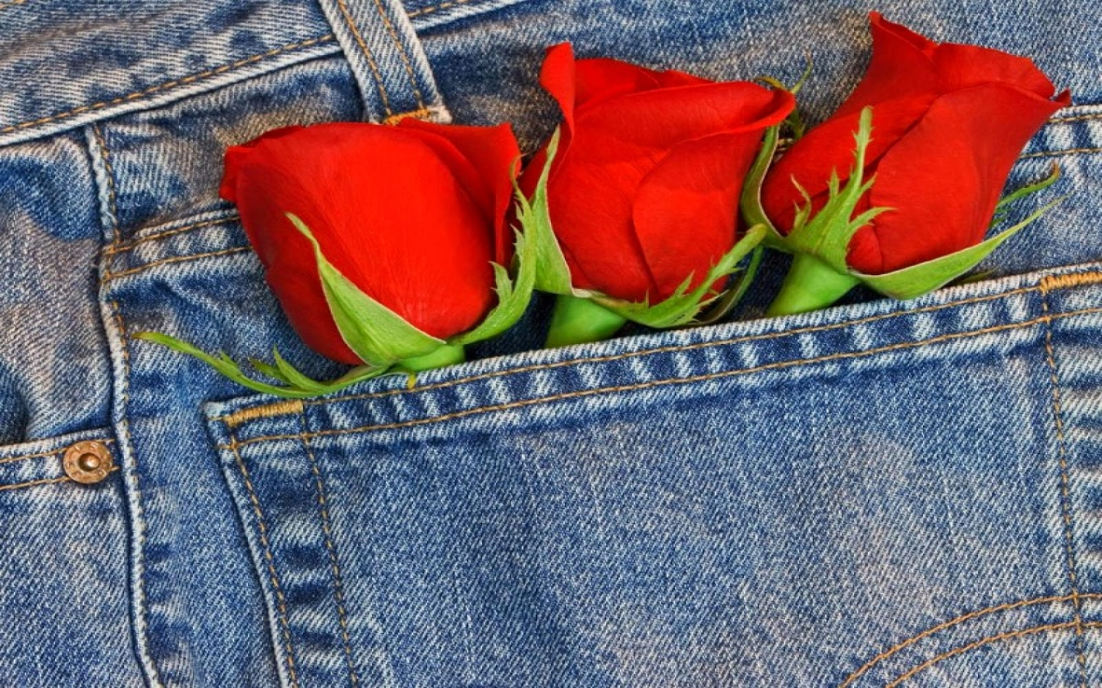 Flores Rojas, parte 4