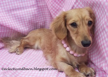 Eclectic Red Bar: Doxies Tiny decked out in pink