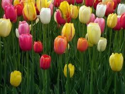 10 Jenis Bunga Paling terindah di Dunia