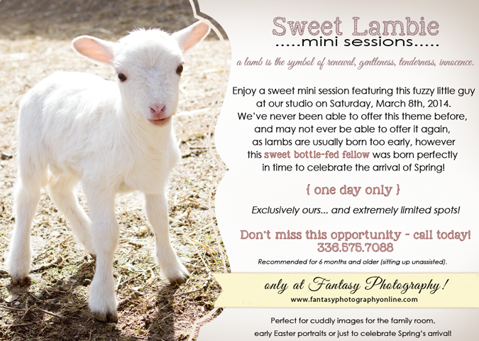 winston salem child pictures with live lamb baby sheep