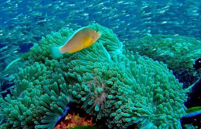 terumbu karang, gili asahan, lombok barat, surga bawah laut, diving di lombok, snorkeling di lombok, pulau gili,
