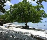 Pantai Melur Pulau Galang