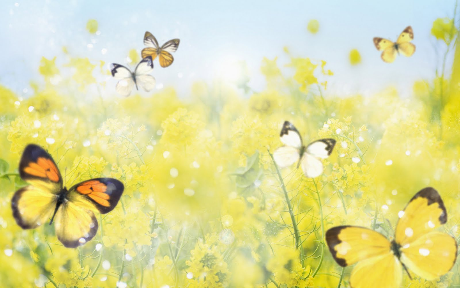 Butterfly Flowers Wallpapers