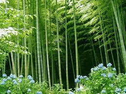 Pohon Pakis dan Bambu