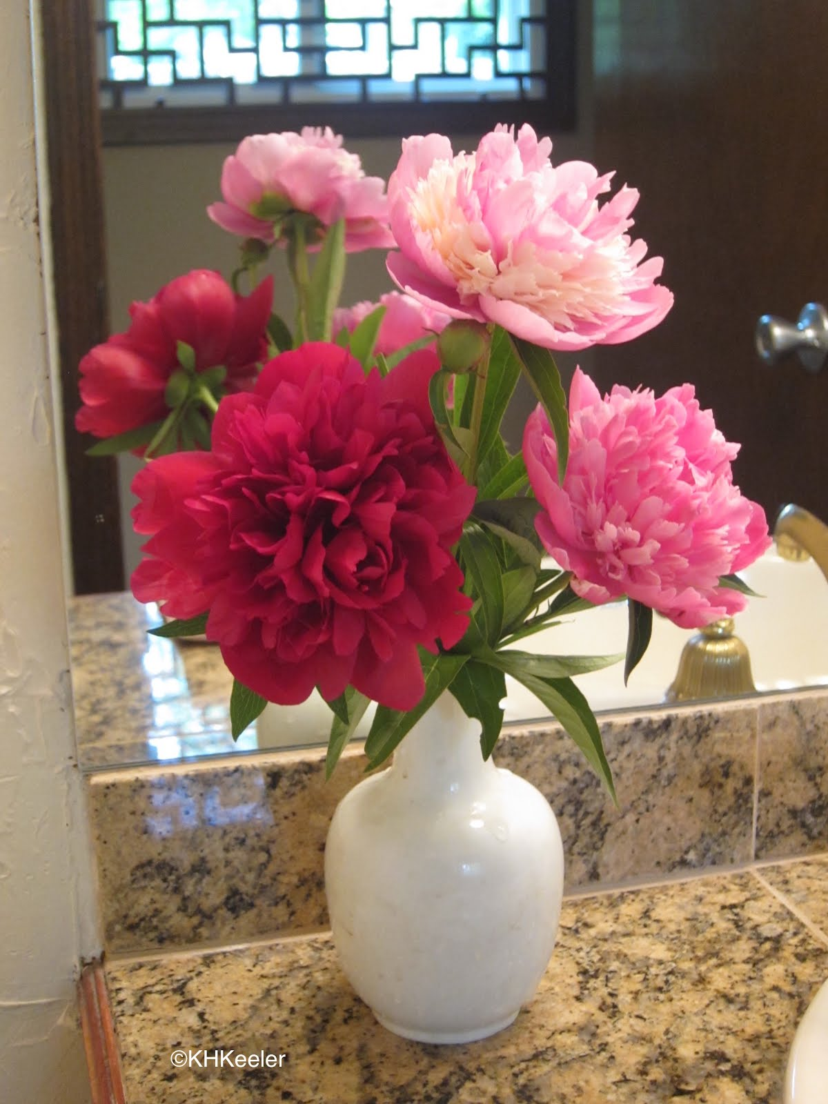 A Wandering Botanist Plant Story Peonies From Europe