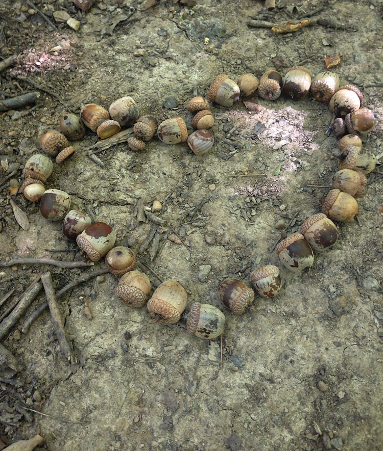A heart made of acorns to show the love and appreciation of nature.