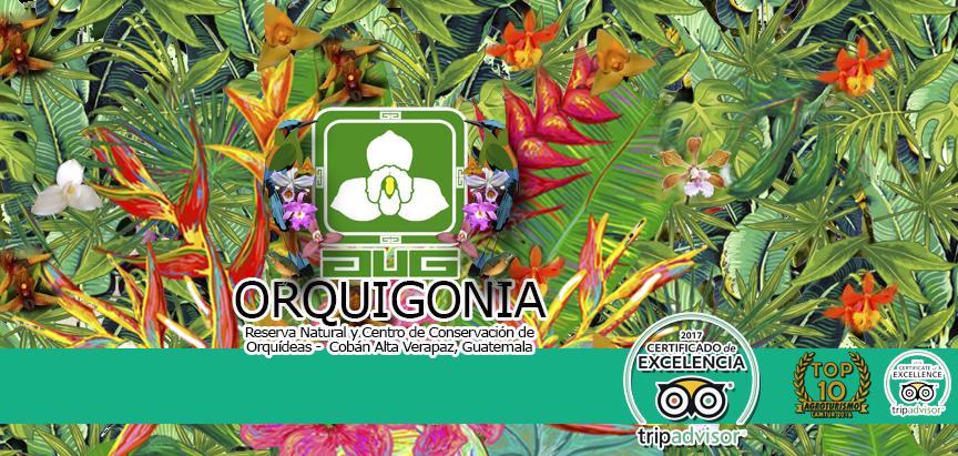 Orquigonia El Rincón de las Orquídeas