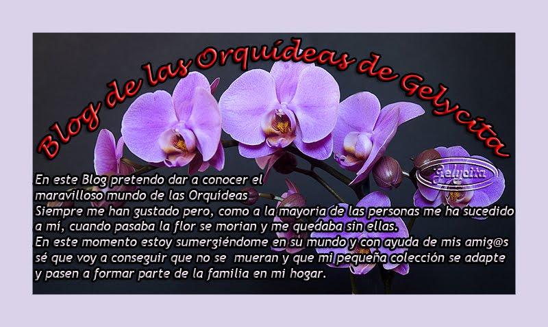 Blog de las Orquídeas de Gelycita