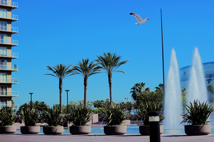Long Beach, California, Aimerose Blog