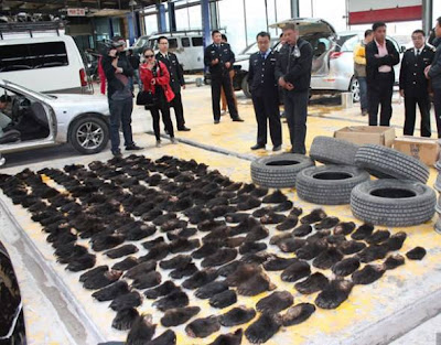 China Customs officials confiscate 213 bear paws