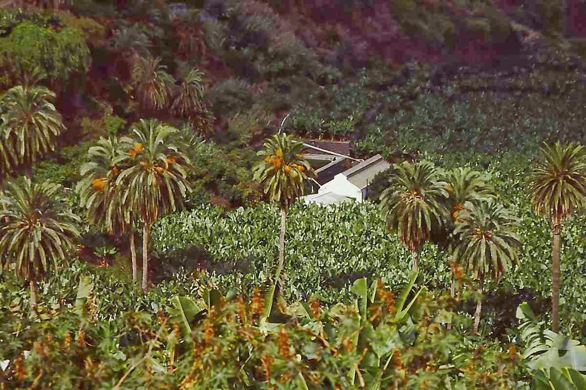 Die Finca ist unter den Bananenstauden kaum noch zu sehen © Copyright Monika Fuchs, TravelWorldOnline