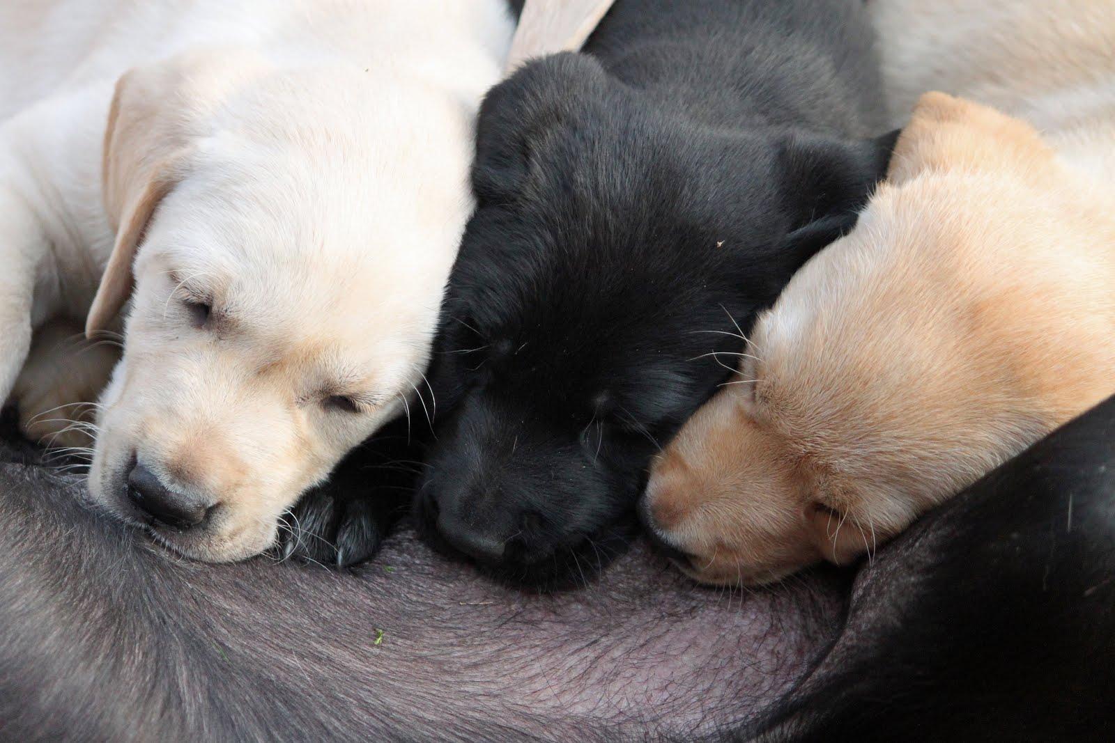 Klik hier voor nieuws over pups!