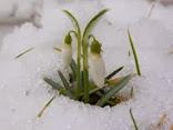 Пришла весна!