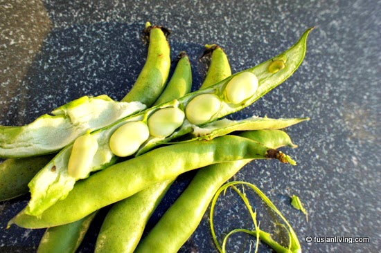 Broad bean pod split open with five beans