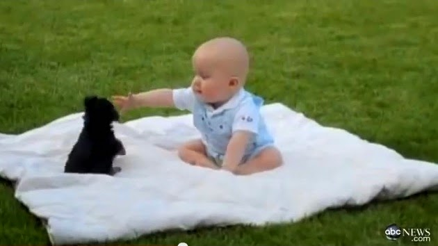 baby goat playing with puppies, baby and puppy, puppies playing with babies videos