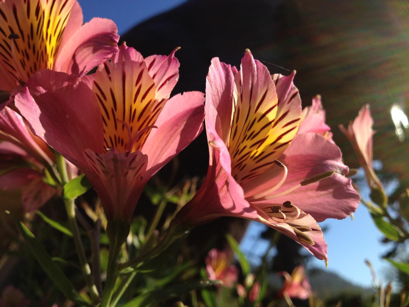 http://4.bp.blogspot.com/-w6w_TA9vPcU/TpBcNCeQsmI/AAAAAAAABGs/XrDwGPQS-YQ/s1600/iphone-4S-camera+photo_1.jpg