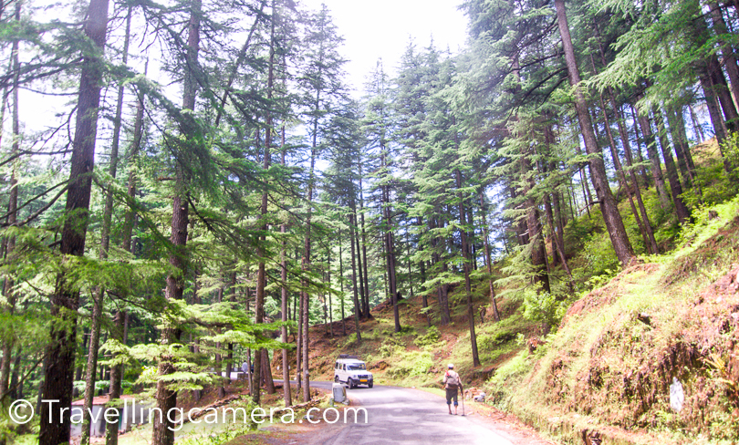 After a while, we hit the main road which connected us to Deodar forests which indicate that you are close to Jageshwar now. Jageshwar is 45 kilometers from Binsar although the other route via Almora is bit longer. Everyone was excited to see these high & old deodar trees all around.