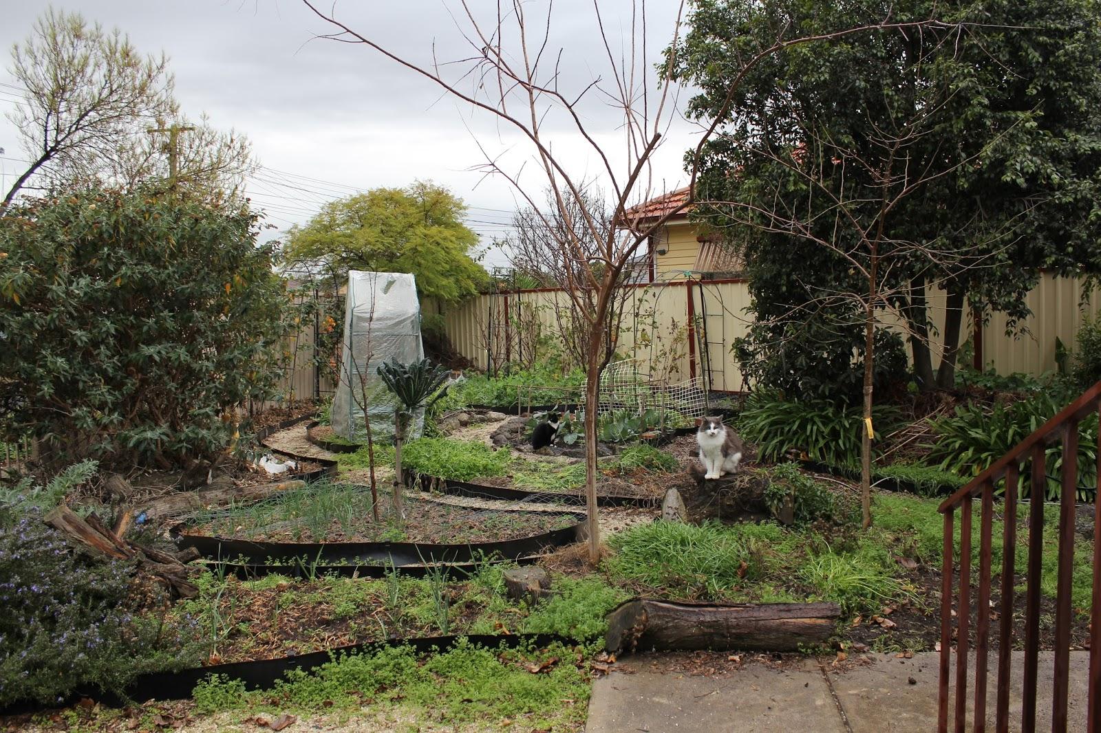 bek u0027s backyard garden share collective july