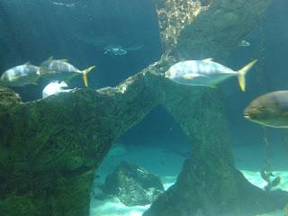 Aquarium del Zoo Aquarium de Madrid dónde podrás ver tiburones, medusas, rayas, peces payaso, etc.