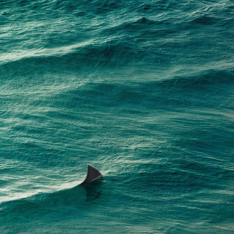Фотографий природы в стиле минимализма (15 фото)