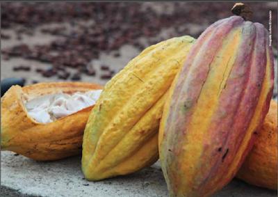 Cacao de Ecuador