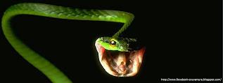 Couverture Facebook hd d'un serpent
