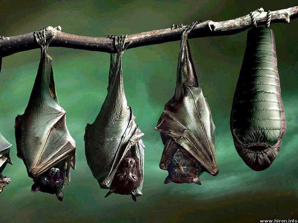 Beautiful Wallpapers: bats wallpaper