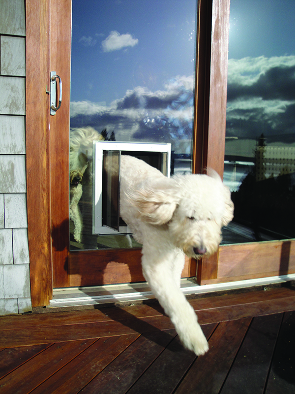 Plexidor Pet Doors Yes You Can Put A Pet Door In A