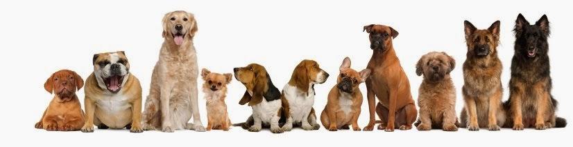 DOGY SAYA : Salon Anjing Panggilan