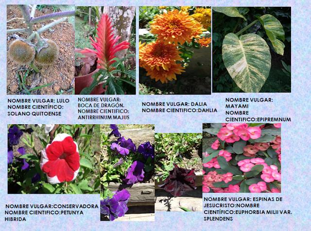 Animales y plantas de mi regi n galer a de plantas - Plantas de jardin nombres ...