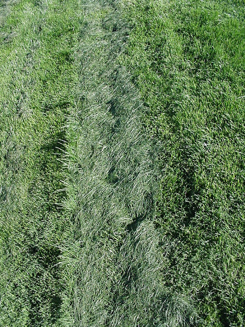 Xtremehorticulture of the desert bermudagrass lawn for How often should you mow your lawn