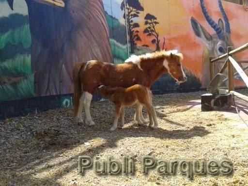 Pony de Terra Natura