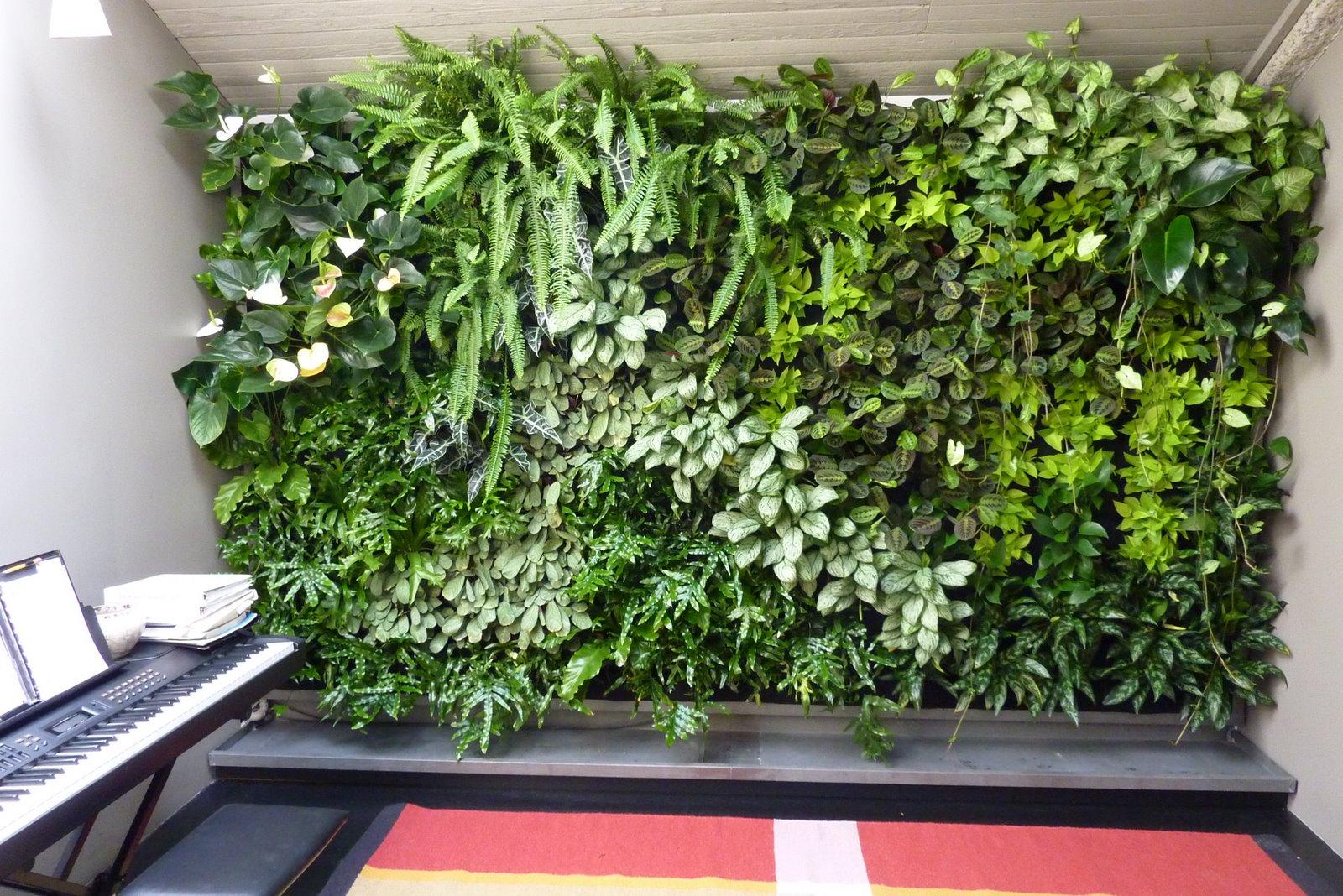 jardim vertical wall plant