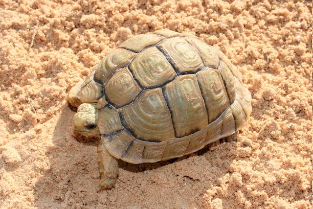 черепаха на песке