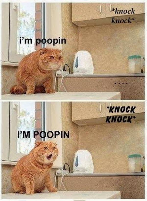 30 Funny animal captions - part 20 (30 pics), funny animal pictures with captions, funny captioned pictures