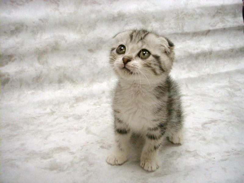 , Selamat terpesona melihat foto kucing-kucing lucu berikut ini