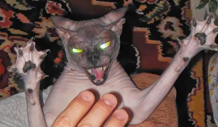 Funny cats - part 91 (40 pics + 10 gifs), scary looking hairless cat