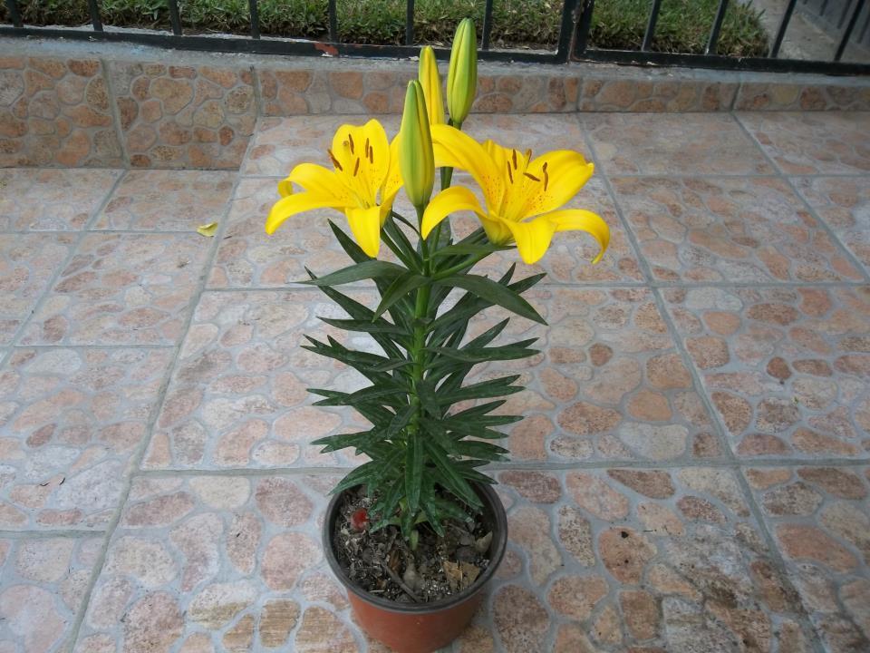 Vivero los arcos flores hermosas para tus eventos m s for Viveros de plantas de ornato