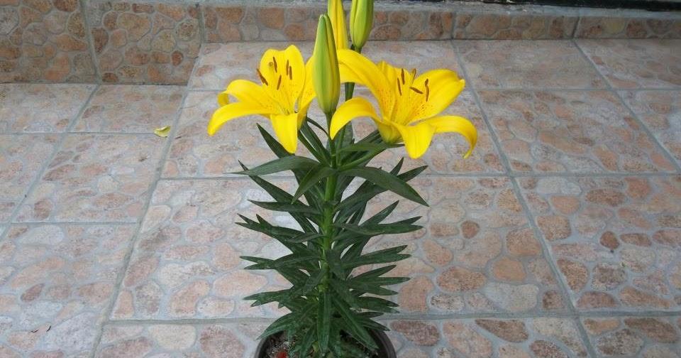Vivero los arcos flores hermosas para tus eventos m s for Vivero mi planta